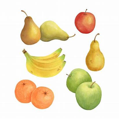 Fruit Clipart Watercolor Pear Individual Pumpkins Webstockreview