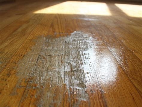 hardwood floors hurt dog pee on laminate wood floor how to clean dog poop u0026 urine from a laminated floor