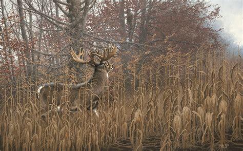 whitetail deer chisholm valley wildlife art