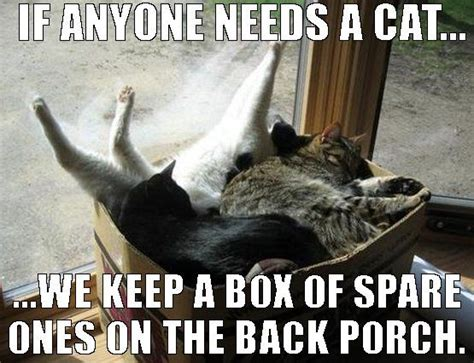 Pussy Cat Meme - 17 best images about what s new pussycat on pinterest kitty cats cute cats and cute kitty
