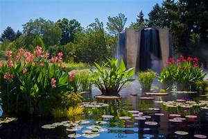 Panoramio photo of fountain and lilly pond denver for Botanical gardens colorado