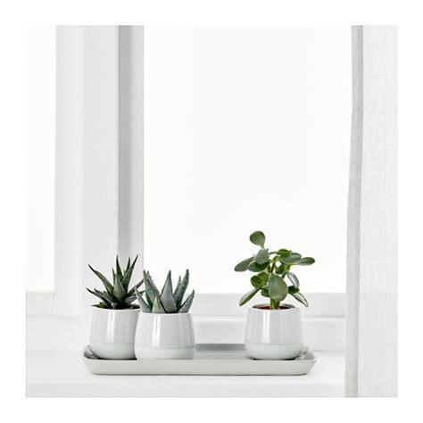 Badezimmer Pflanzen Ikea by Succulent Pflanze Mit 220 Bertopf Grau Mamas Zimmer