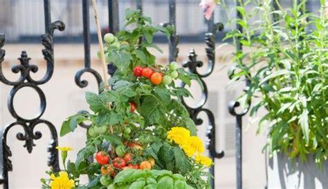 planter des tomates en pot 1000 ideas about planter des tomates cerises on planters growing tomatoes and
