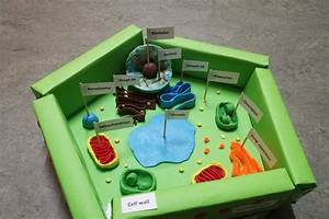 Diy  Plant Cell Model Project