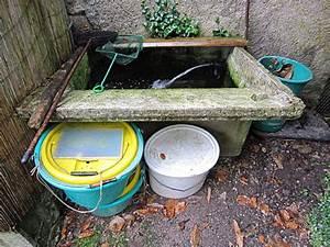 Bulleur Pour Bassin : am nager un bac vif ~ Premium-room.com Idées de Décoration