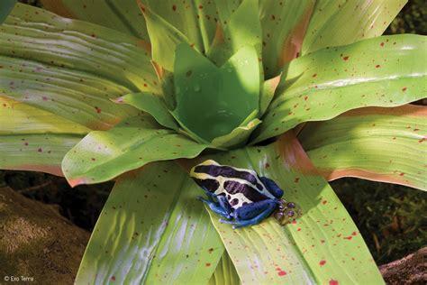 exo terra bromelia smart plant dart frog plant