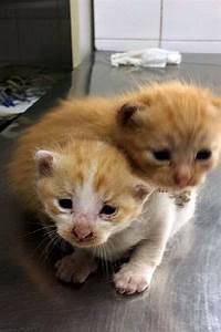Due gattini appena nati adottati dalla polizia municipale: chi vuole prenderli con sé? La