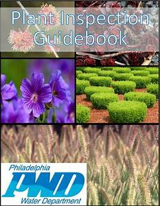 Pdf For Plant Identification  245 Pages  Original Link