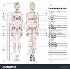 Woman Body Measurement Chart Scheme Measurement Stock