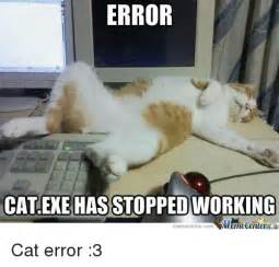 cat stopped 25 best memes about cat exe cat exe memes