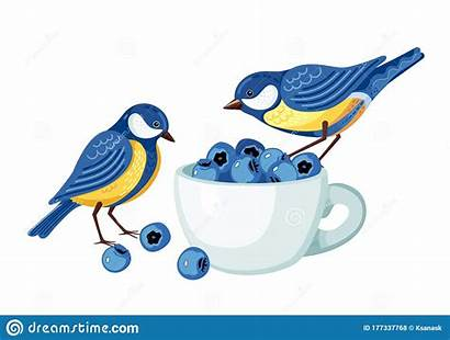 Tits Clip Birds Cup Blueberries Berries Eating