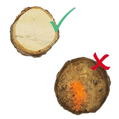 Weihnachtsbaum Länger Frisch tipps damit der weihnachtsbaum l 228 nger frisch bleibt