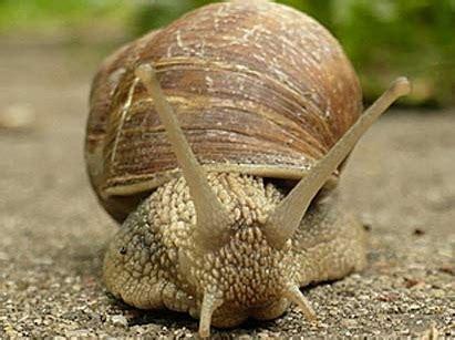 cuisiner les escargots de bourgogne escargot gare a socrate stephan lagorce