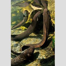 Taniwha  New Zealand Geographic