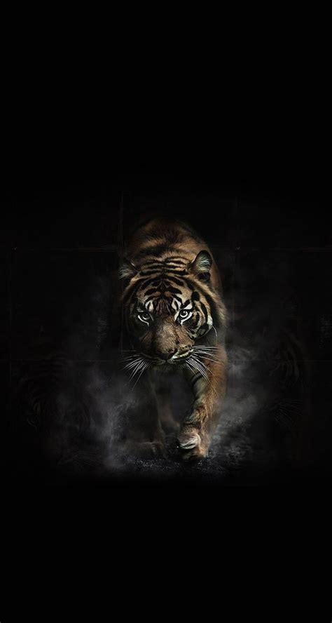 Tiger Animal Wallpaper - shere khan photography tiger wallpaper
