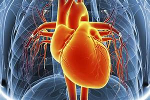 How Blood Flows Through The Heart And Lungs