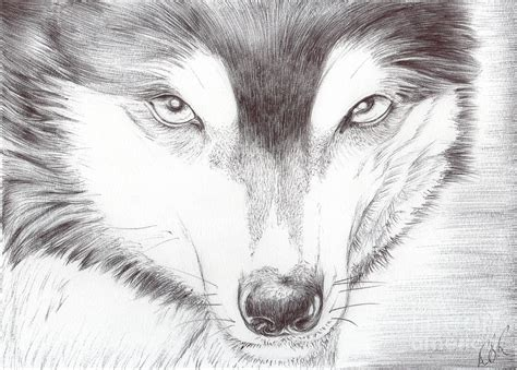 graceful wild animal  blog wild animal drawings