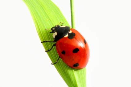 home and garden interior design ladybugs bring luck