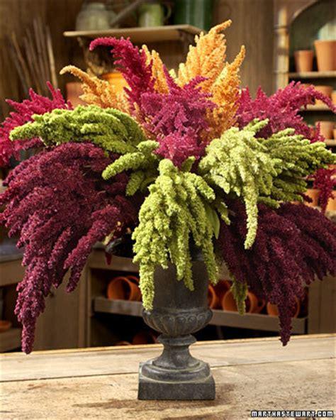 amaranthus martha stewart