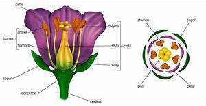 Diagram Of Flower Bunch