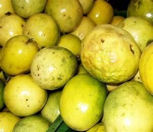 Maracuya o Fruta de la Pasión, propiedades medicinales ...