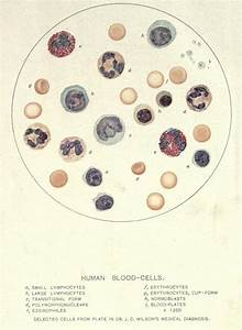 40 Best Inspirations From Sciences Images On Pinterest