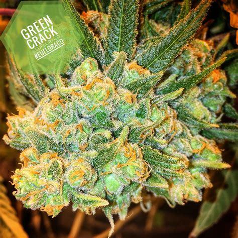 bester cannabis dünger best cannabis strains for high blood pressure euflora