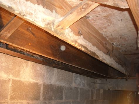 white mold  floor joists  crawlspace  removal