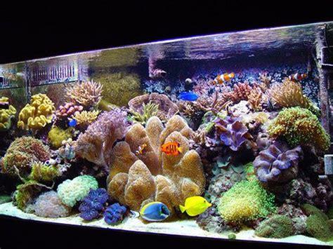 les 25 meilleures id 233 es concernant aquarium r 233 cifal sur poissons marins vie sous