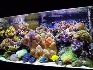 Idee Decoration Aquarium : id e d co aquarium recifal ~ Melissatoandfro.com Idées de Décoration