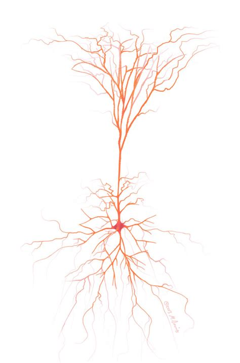 Neuron Synapses Visualized - ZBrush, Photoshop - Michelle