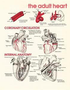 108 best images about Nursing - Cardiac on Pinterest ...