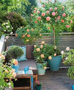 Small rose garden growing roses in containers balcony for Pictures of small rose gardens