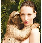 DELINLEE DELOVELY: from bears to sloths...pirelli calendar action for ...