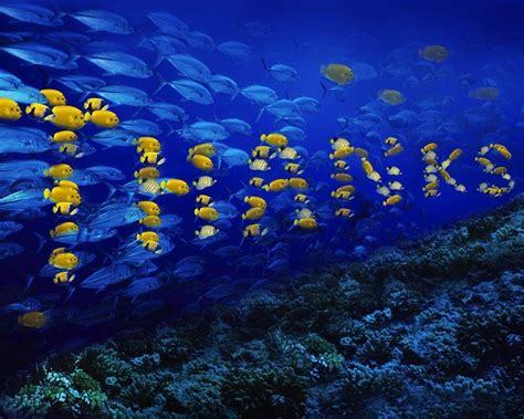Animated Fish Wallpaper For Pc - fish desktop backgrounds wallpaper cave