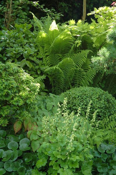 Shade Garden With Hosta, Fern, Lady's Mantle, Boxwood