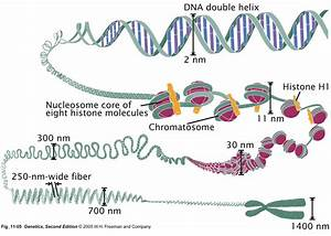 Chromosome Structures