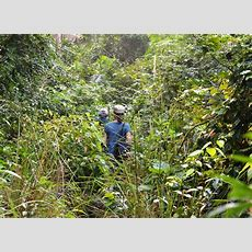 Through The Jungle In Nepal  2 Live The Dream