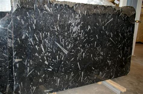 polished black fossil marble slab tile supplier  china