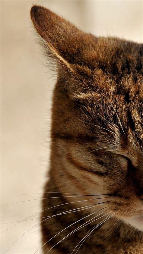 sleeping cat wallpaper  hd wallpaper background