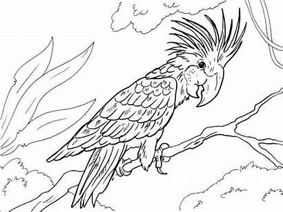Coloring Turtle Macaw Bird Coloringpagesfortoddlers Enregistree Depuis