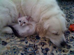 Cat and dog, love story by Elphyr on deviantART