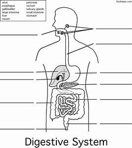 15 Best Digestive System Images On Pinterest