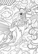 Coloring Pages Adult Animals Adults Animal Humminbird sketch template