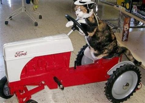 top  fully licenced cats  drive   living paperblog