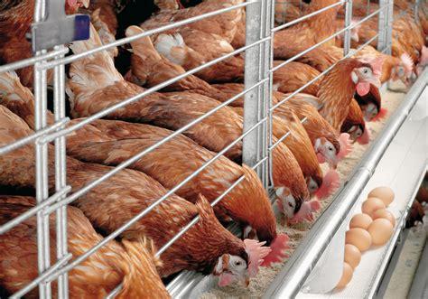 start poultry farming  nigeria business plan