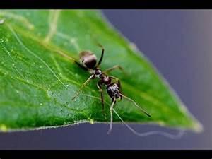 Wie Bekämpfe Ich Ameisen : blattl use wie bekomme ich die weg doovi ~ Whattoseeinmadrid.com Haus und Dekorationen