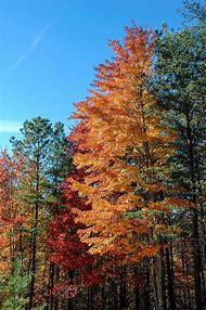 Smoky Mountains Fall Colors