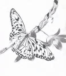 Butterfly Flower Art Drawing