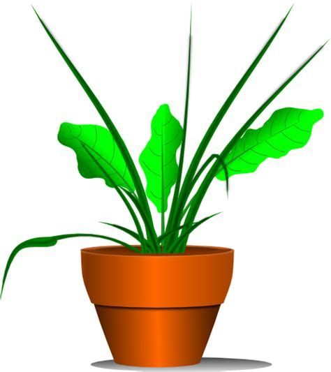 Plant Clip Plant Clipart Transparent Pencil And In Color Plant